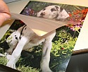 "100 Laminating sheets  7 3/4"" by 11"" (Unibind Sticky Backs)"